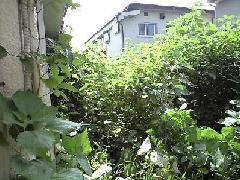 東京都内アパートの共用部の草刈作業事例
