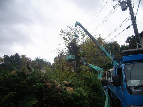 木の伐採作業