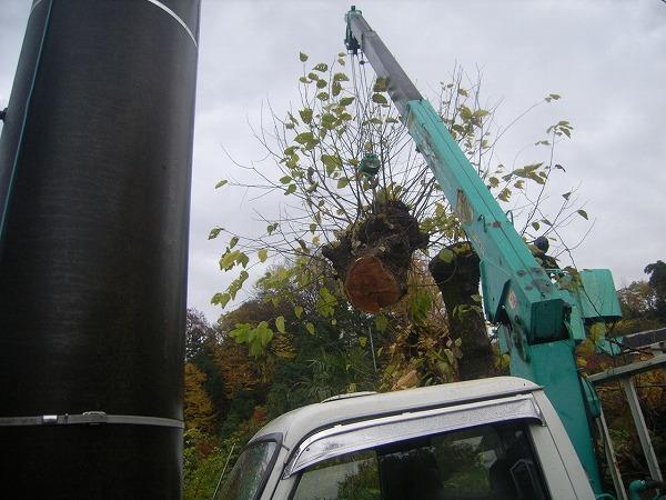クレーン車で木の伐採