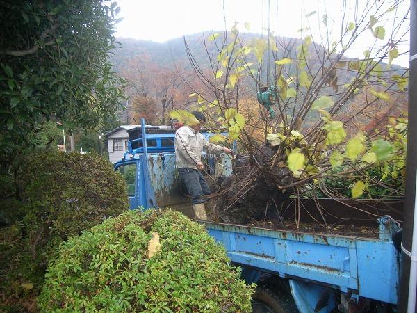 運搬車に木の積み込み
