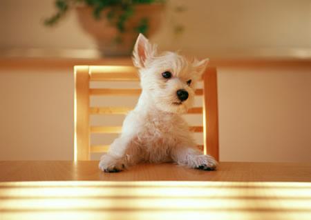 猫や犬などのペット臭