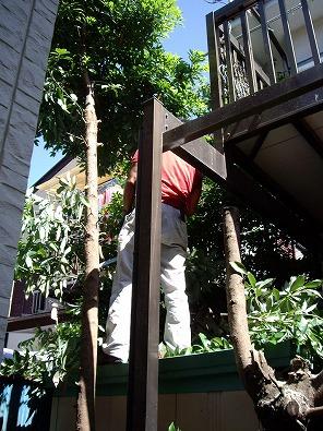 神奈川県庭木伐採