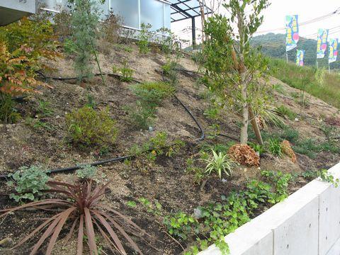 マンションのファサード植栽