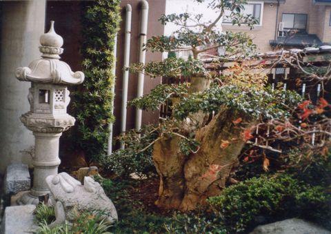 神社の社務所中庭  (台モチ 大和塀 春日燈籠 出雲大社)