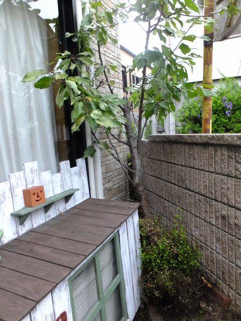 狭小住宅での樹木伐採