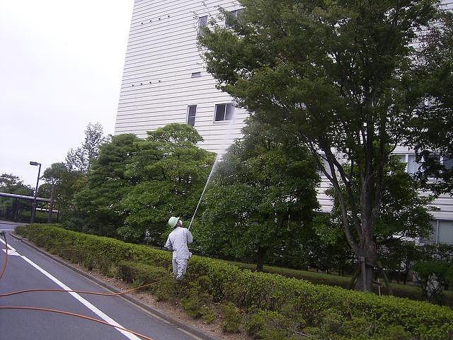 樹木害虫の駆除