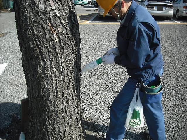 松樹幹注入