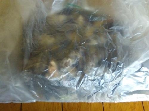 東京都豊島区 ハクビシンのフンを回収。天井裏の殺菌消毒作業
