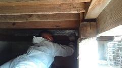 千葉県船橋市 ハクビシンの防除施工