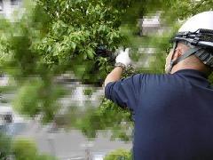 東京都新宿区 カラスの巣撤去作業