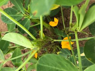 小さな花が咲いています。この花がだんだん地面へ向かっていきます。