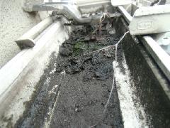 東京都世田谷区の戸建て住宅で実地!雨樋清掃作業事例
