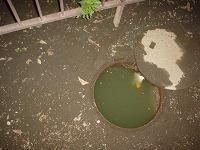 共用マンホールから汚水が溢れる