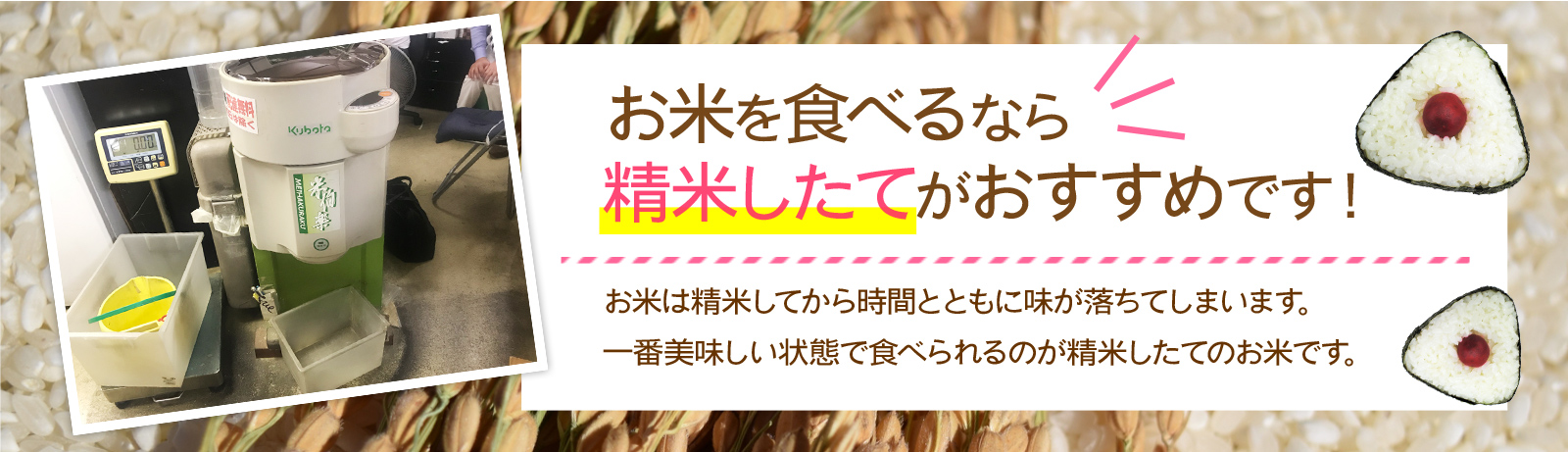 お米を食べるなら精米したてがおすすめです