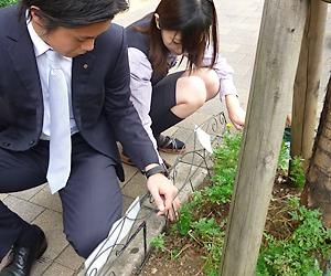 「緑化運動」歩道の花壇を清掃