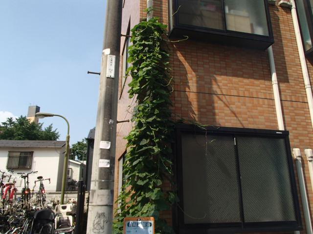 杉並区内 マンションの除草作業
