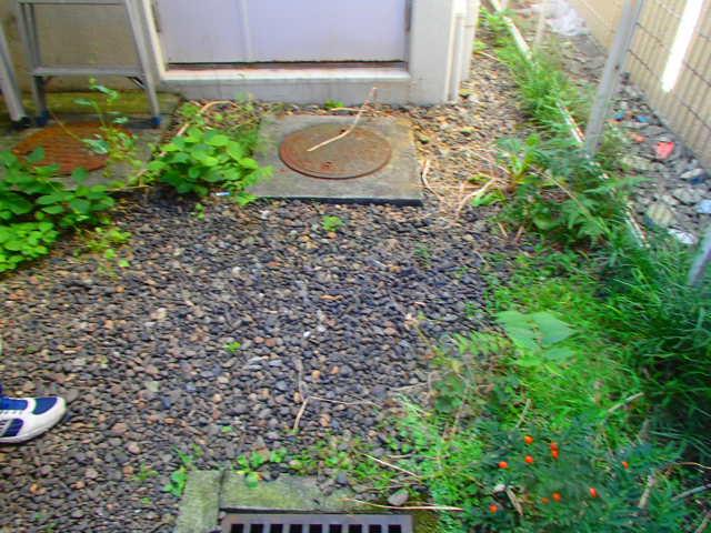 杉並区上荻 マンション 建物周り 除草作業