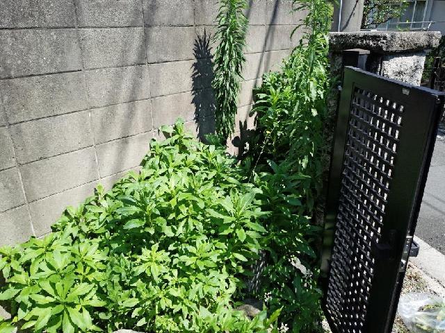杉並区 個人宅 庭 除草作業