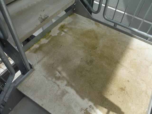 非常階段踊り場 苔除去清掃