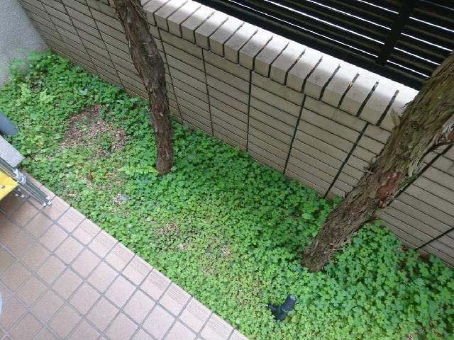 練馬区アパート 植栽部分 除草