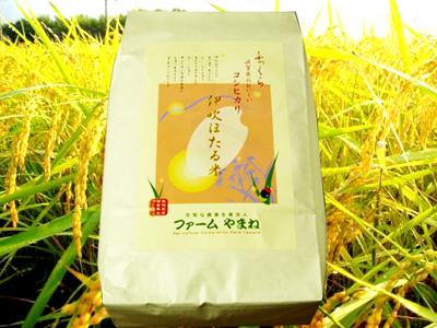 コシヒカリ 玄米5kg