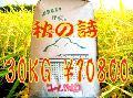 秋の詩30KG玄米