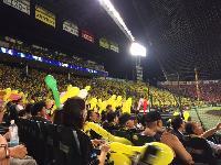 黄色の球場