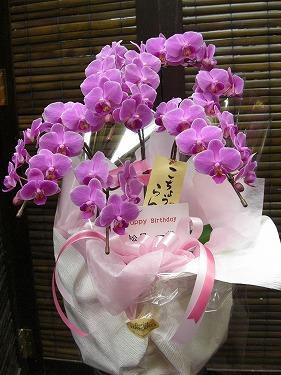 ra0-33 胡蝶蘭ピンク5本