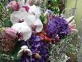 アジサイと胡蝶蘭のスタンド花