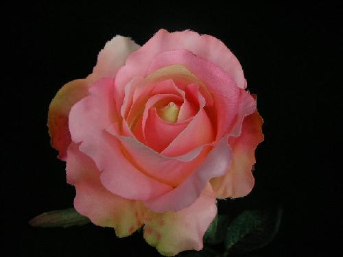 ミッシェルローズ(ピンク)24本入り)[コンビニ後払い]