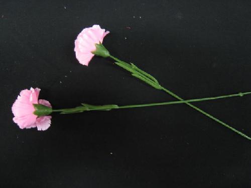 販促用母の日カーネショート(ピンク・144本)卸販売価格