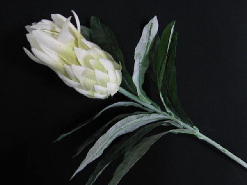 プロテア(ホワイト)