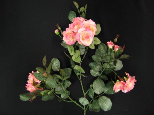 ルビーリップローズ(ピンク)