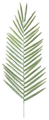 アレカパーム(M)全長95cm ・LES590