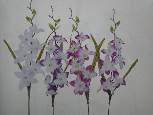 デンファレ(花径8cm・単色36本入り)MY5559W