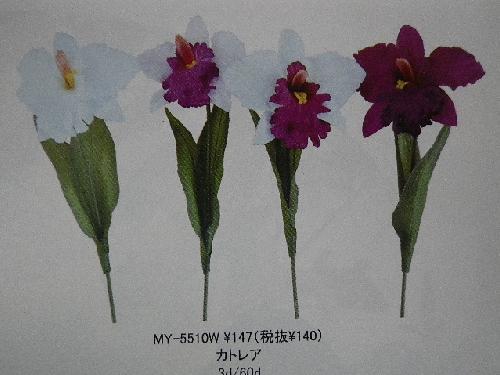 カトレア(花径13cm・単色36本入り)MY5510W