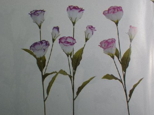 リシアンサス×3(花径5.5cm単色・48本入り)MY5580W