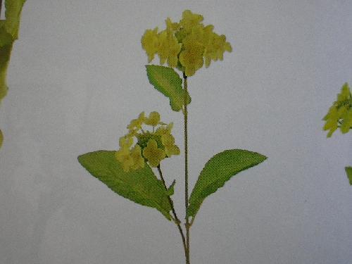 菜の花×2(花径大7cm・48本入り)MY5473