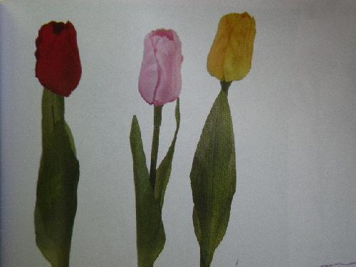 サテンチューリップ×1(花径4.5cm・単色48本入り)MY5028S