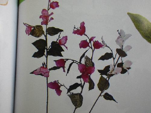 ブーゲンビリア(花径5cm・単色36本入り)MY5317
