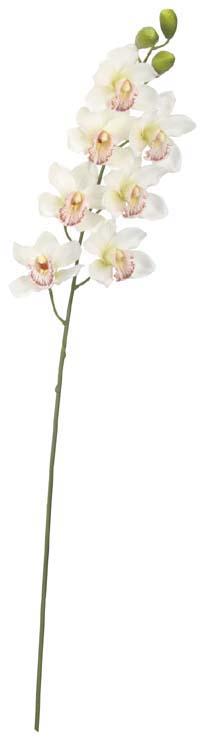 シンビジューム×7(ホワイト花径11cm全長90cm)FLS5241