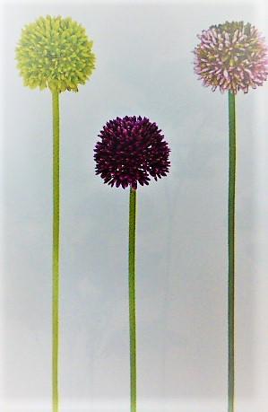 1本¥138造花(ポリアリューム・単色36本入り)141