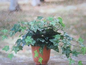 雨や屋外に強い造花