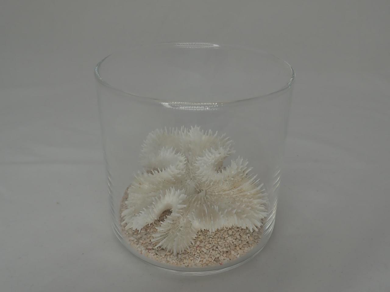8cmタンブラーサンゴセット(1)