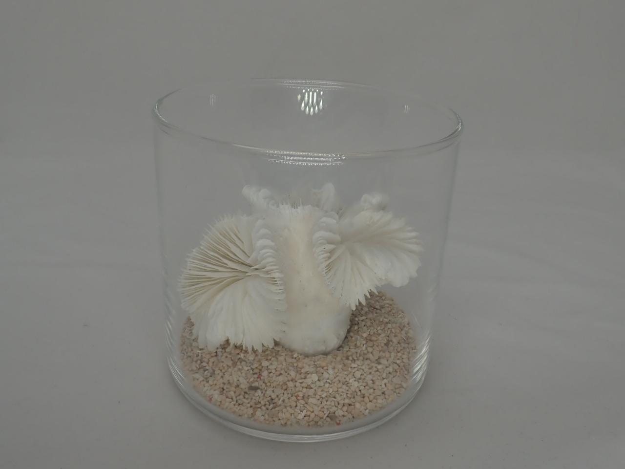 8cmタンブラーサンゴセット(2)