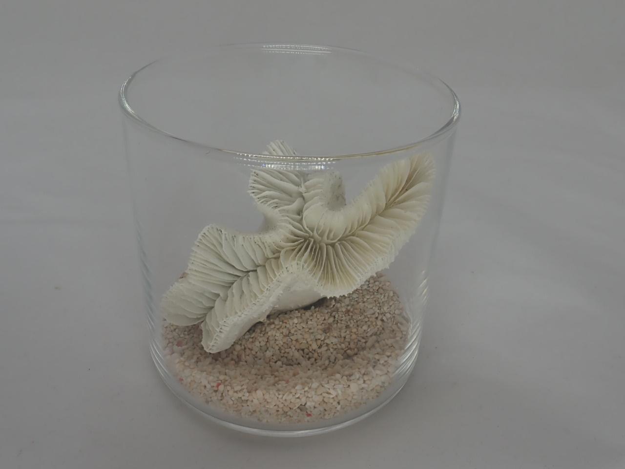 8cmタンブラーサンゴセット(6)