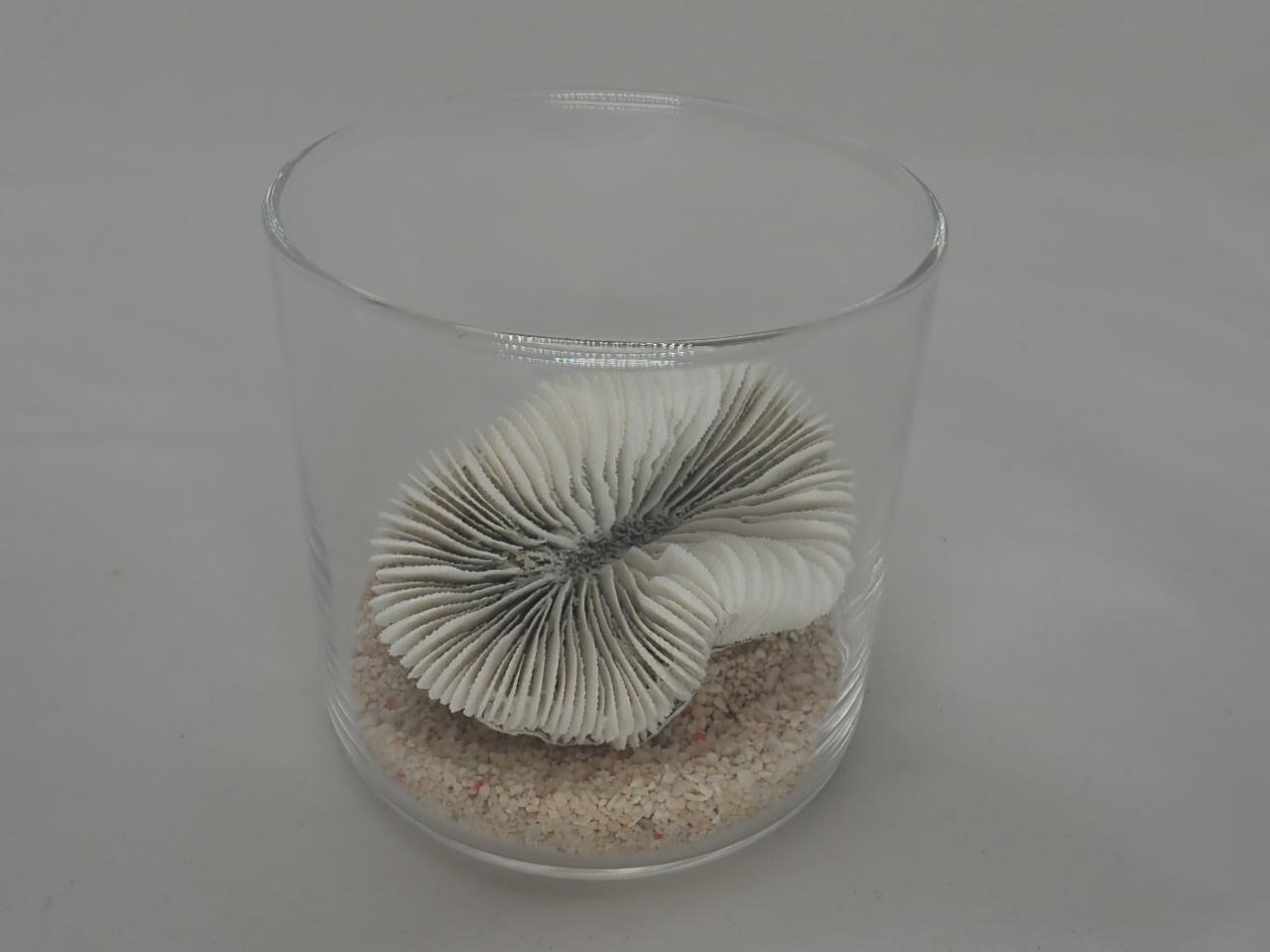 8cmタンブラーサンゴセット(7)
