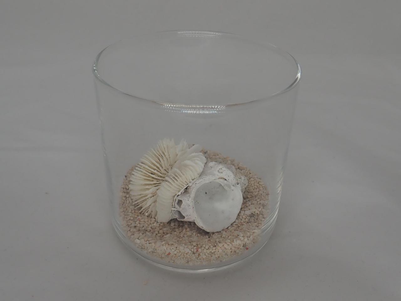 8cmタンブラーサンゴセット(10)