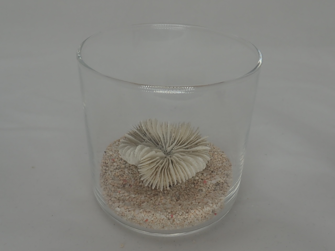 8cmタンブラーサンゴセット(11)