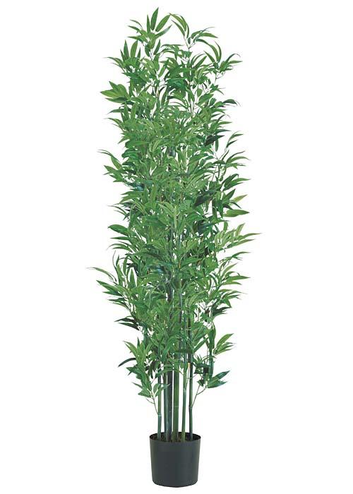 ナチュラルトランク180cm竹ツリー鉢無しLETR7629